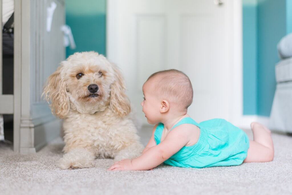 What Time Of Year Is Best For Carpet Cleaning Delta